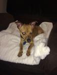 Adoption Pending - Max