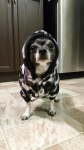 Layla with her hoody