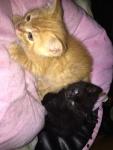 kittens (found homes)