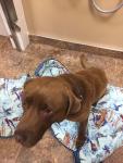 Yogi (Adoption pending pick-up on Tuesday, Sept 25th)